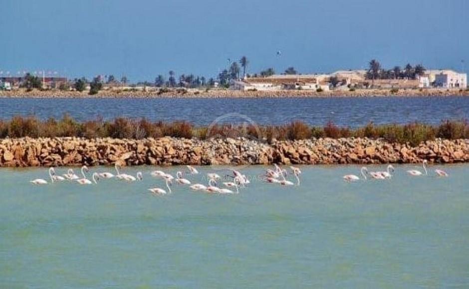 2019-10-24 15_57_11-Cabo de Palos y otros parques naturales en Mar Menor (Murcia) _ Guías Viajar